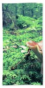 Mushroom In The Green Wood Beach Towel