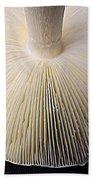 Mushroom Macro Expressionistic Effect Beach Towel