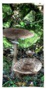 Mushrooms Hdr Beach Towel