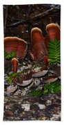 Mushrooms,log And Ferns Beach Towel