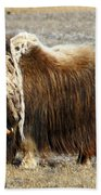 Musk Ox Beach Towel