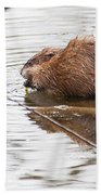 Muskrat Spring Meal Beach Towel