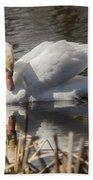 Mute Swan - 3 Beach Towel