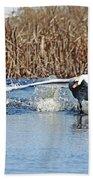 Mute Swan Chasing Canada Goose I Beach Towel