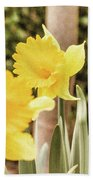 Narcissus Of A Plant Beach Towel