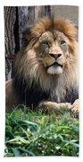 National Zoo - Luke - African Lion Beach Towel