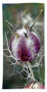 Natural Background With Purple Spiky Bulbs. Beach Towel