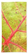 Nature Abstract Sea Grape Leaf Beach Towel
