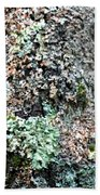 Nature Painted Tree Bark Beach Towel