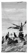 Nature Pelicans Rock  Beach Towel