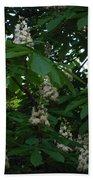 nature Ukraine blooming chestnuts Beach Towel
