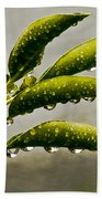 Early Morning Raindrops Beach Towel