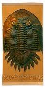 Neometacanthus Fossil Trilobite Beach Towel