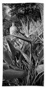 Nepenthe Bird Of Paradise B And W Beach Towel