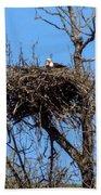 Nesting Bald Eagle Beach Towel