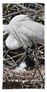 Nesting Great Egret With Chick Beach Towel