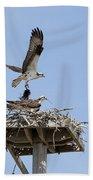Nesting Osprey In New England Beach Sheet