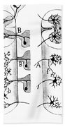 Neuroglia Cells Illustrated By Cajal Beach Towel