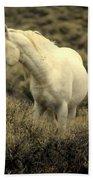 Nevada Wild Horses 4 Beach Towel