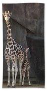 New Baby Giraffe Beach Towel
