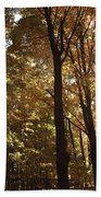 New England Autumn Forest Beach Towel