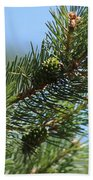 New Growth Pinecone At Chicago Botanical Gardens Beach Towel