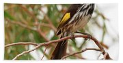 New Holland Honey-eater Beach Towel