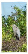 New Nest For Great Blue Heron Beach Towel