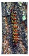 New Orleans Buck Moth Caterpillar Beach Towel