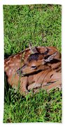 Newborn Red Deer Beach Towel