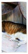 Nine Lives Beach Towel by Debbi Granruth