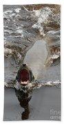Noisy Sea Lion Beach Towel