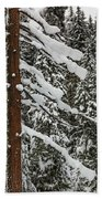 North Cascades Forest Beach Towel