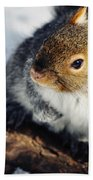 North Pond Squirrel Beach Towel
