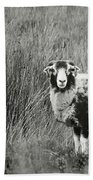 North Yorkshire Moors Sheep Beach Towel