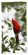 Northern Cardinal - In The Wind Beach Towel