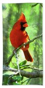 Northern Cardinal Proud Bird Beach Towel