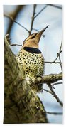 Northern Flicker - Woodpecker Beach Towel