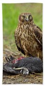 Northern Harrier Beach Towel