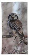 Northern Hawk Owl 9470 Beach Towel
