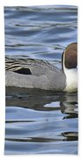 Northern Pintail Beach Towel