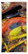 Northern Red Brook Beach Towel