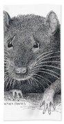 Norway Rat Beach Towel