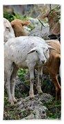 Nosy Sheep Beach Sheet