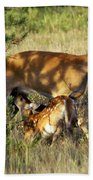 Nursing Fawn Beach Towel