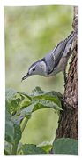 Nuthatch On The Move Beach Sheet
