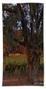 Oak Tree And Vineyards In Knight's Valley Beach Towel