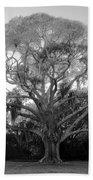Oak Tree Beach Sheet