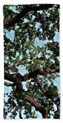 Oak Tree Three Beach Towel