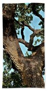 Oak Tree Two Beach Towel